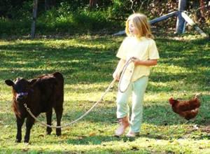 Leading a Heifer calf, named Minty